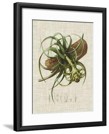 Elegant Tropicals V-Vision Studio-Framed Art Print