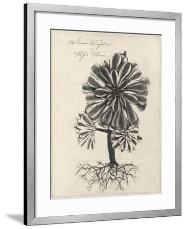 Thornton Succulents IV-Robert Thornton-Framed Art Print