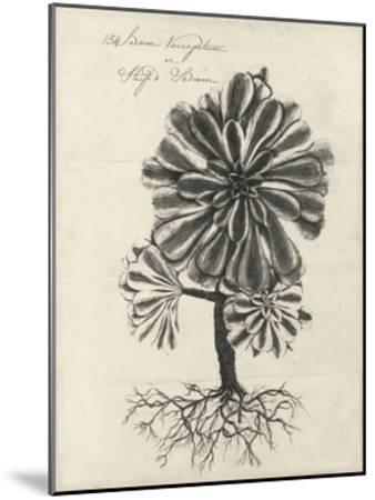 Thornton Succulents IV-Robert Thornton-Mounted Art Print