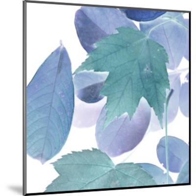 Xray Leaves III-Vision Studio-Mounted Art Print