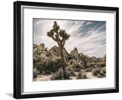 Views of Joshua Tree VIII-Rachel Perry-Framed Art Print