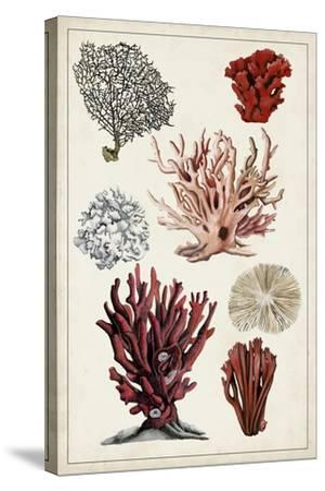 Antique Coral Study I-Naomi McCavitt-Stretched Canvas Print