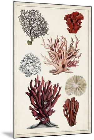 Antique Coral Study I-Naomi McCavitt-Mounted Art Print