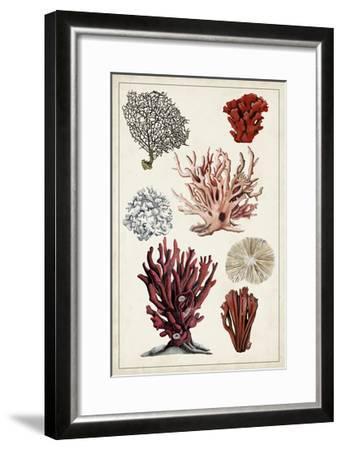 Antique Coral Study I-Naomi McCavitt-Framed Art Print