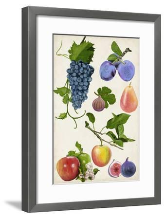 Fruit Collection II-Naomi McCavitt-Framed Art Print