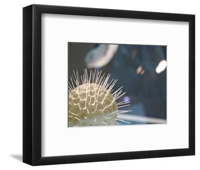 Underwater World 34-DAG, Inc-Framed Art Print