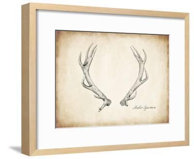 Antler Specimen A-THE Studio-Framed Premium Giclee Print