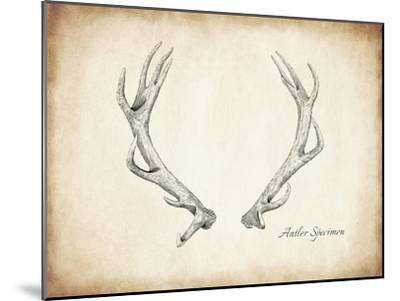 Antler Specimen A-THE Studio-Mounted Premium Giclee Print