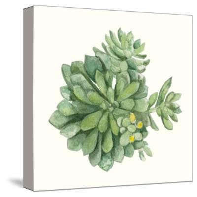 Tropical Botanicals 8-Natasha Marie-Stretched Canvas Print