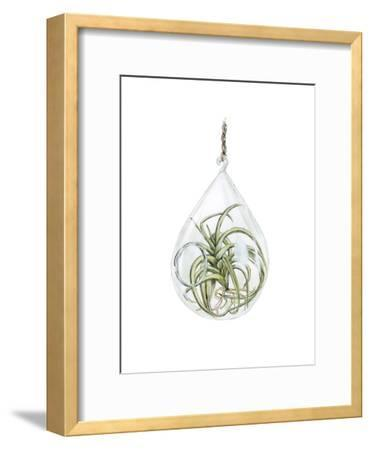 Air Plant 3-Brenna Harvey-Framed Premium Giclee Print