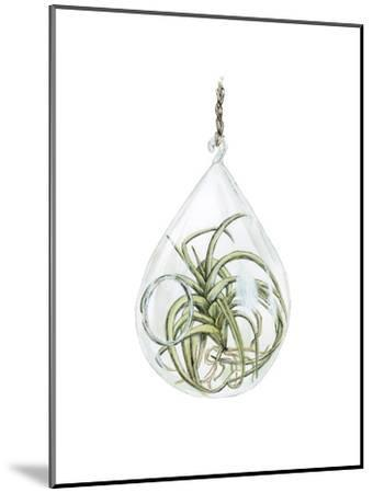 Air Plant 3-Brenna Harvey-Mounted Premium Giclee Print