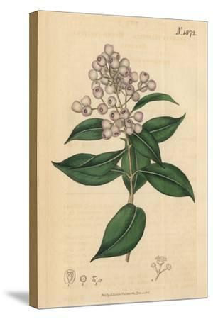Berries and Leaves Vintage Botanical Print-Piddix-Stretched Canvas Print