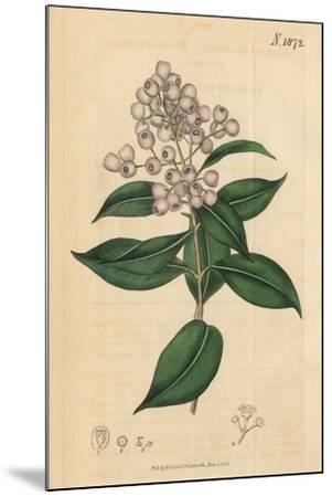 Berries and Leaves Vintage Botanical Print-Piddix-Mounted Art Print