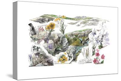 A Drawing of the Wildflowers in America's Alpine Tundras-Jack Unruh-Stretched Canvas Print