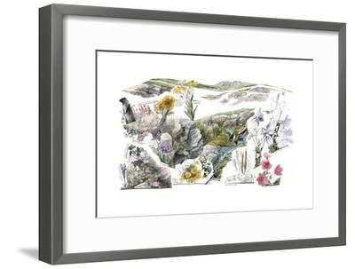 A Drawing of the Wildflowers in America's Alpine Tundras-Jack Unruh-Framed Giclee Print