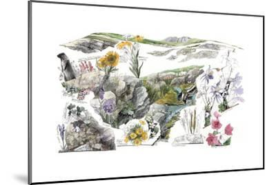 A Drawing of the Wildflowers in America's Alpine Tundras-Jack Unruh-Mounted Giclee Print