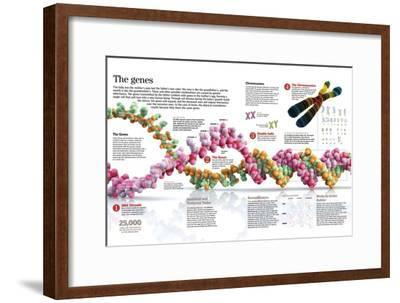 Infographic of the Structure of Dna and the Mechanism of Genetic Inheritance in People--Framed Poster