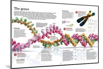 Infographic of the Structure of Dna and the Mechanism of Genetic Inheritance in People--Mounted Poster