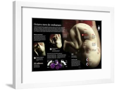 Infografía De Un Feto Durante El 8º Mes, Colocación En La Posición Definitiva Para El Parto--Framed Poster