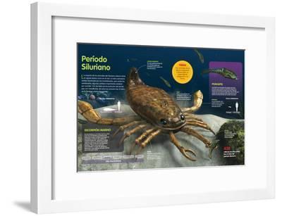 Infografía De Los Animales Del Fondo Oceánico En El Período Silúrico (Hace --Framed Poster