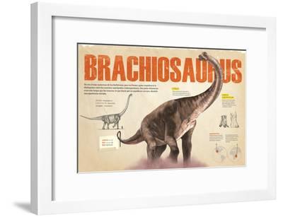 Infografía Del Brachiosaurus Y Las Zonas Donde Se Hallaron Fósiles De Este --Framed Poster