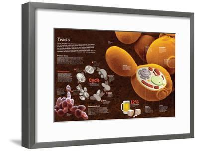 Infographic of the Composition and Reproduction Process of the Yeast--Framed Poster