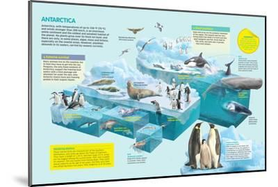 Infographic That Shows the Fauna That Lives in the Coldest Place in the Planet, Antarctica--Mounted Poster