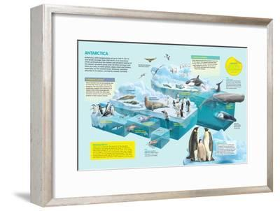 Infographic That Shows the Fauna That Lives in the Coldest Place in the Planet, Antarctica--Framed Poster