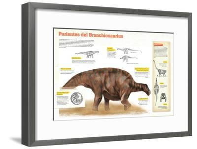 Infografía Sobre Los Diplodocoideos, Durante El Período Jurásico, En El Mesozoico--Framed Poster