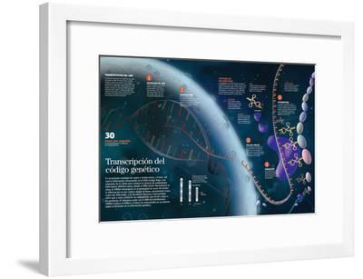 Infografía Que Muestra El Proceso De Transcripción Del Adn Del Núcleo Celular a Las Organelas--Framed Poster
