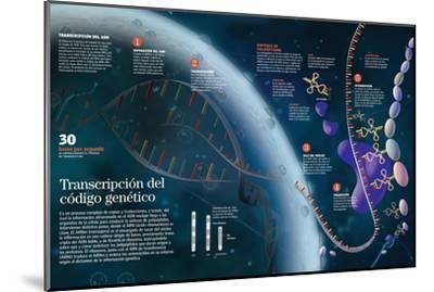 Infografía Que Muestra El Proceso De Transcripción Del Adn Del Núcleo Celular a Las Organelas--Mounted Poster