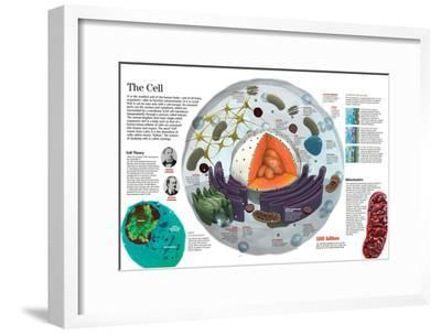 Infographic of the Composition of the Human Cell and the Principal Cell Theories--Framed Poster