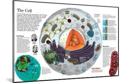 Infographic of the Composition of the Human Cell and the Principal Cell Theories--Mounted Poster