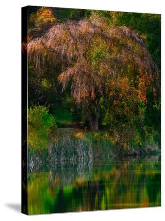 Fall Reflection-Steven Maxx-Stretched Canvas Print