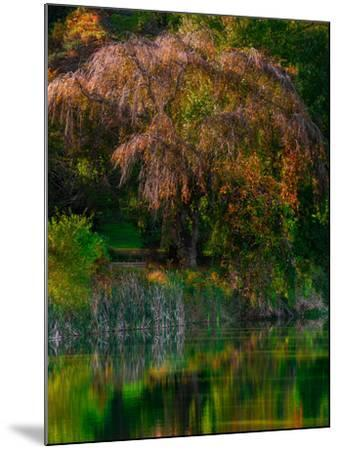 Fall Reflection-Steven Maxx-Mounted Photographic Print