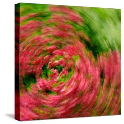 Floral Swirl-Steven Maxx-Stretched Canvas Print