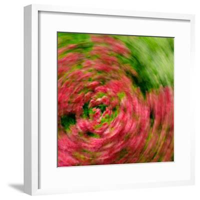 Floral Swirl-Steven Maxx-Framed Photographic Print
