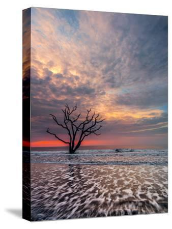 Boneyard-Steven Maxx-Stretched Canvas Print