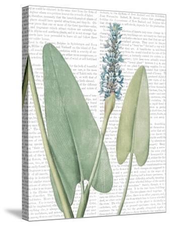 Summer Botanicals IV-Wild Apple Portfolio-Stretched Canvas Print