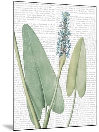 Summer Botanicals IV-Wild Apple Portfolio-Mounted Art Print