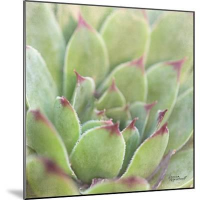 Garden Succulents I Color-Laura Marshall-Mounted Art Print