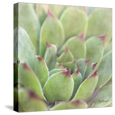 Garden Succulents I Color-Laura Marshall-Stretched Canvas Print