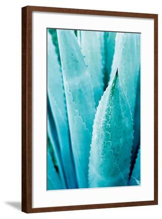 Abstract Agava II Color-Elizabeth Urquhart-Framed Art Print