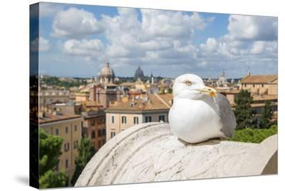 Dolce Vita Rome Collection - View of Seagull-Philippe Hugonnard-Stretched Canvas Print