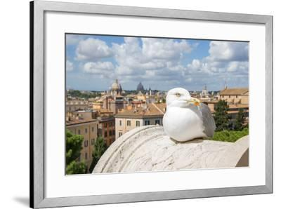 Dolce Vita Rome Collection - View of Seagull-Philippe Hugonnard-Framed Photographic Print