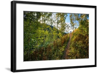 Mt Biker Rides The Singletrack On The Putt Putt Trail Across From Snow King Ski Area, Jackson, WY-Jay Goodrich-Framed Photographic Print