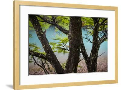 A Glacier River Flows Through Wind Driven Beech Trees In Los Glacieres National Park, Argentina-Jay Goodrich-Framed Photographic Print
