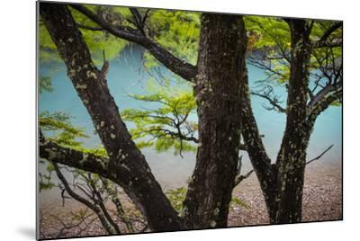 A Glacier River Flows Through Wind Driven Beech Trees In Los Glacieres National Park, Argentina-Jay Goodrich-Mounted Photographic Print