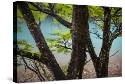 A Glacier River Flows Through Wind Driven Beech Trees In Los Glacieres National Park, Argentina-Jay Goodrich-Stretched Canvas Print