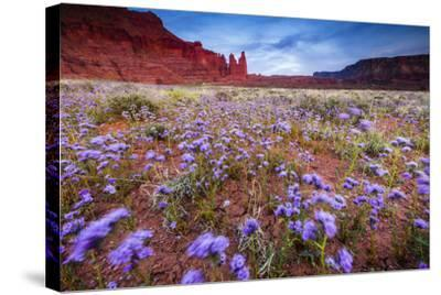 Purple Flowers Bloom, Early Spring, The Desert Eco-System Surrounding Fisher Towers Near Moab, Utah-Jay Goodrich-Stretched Canvas Print